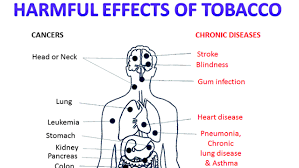 The Harmful Effects of Tobacco and Vaping